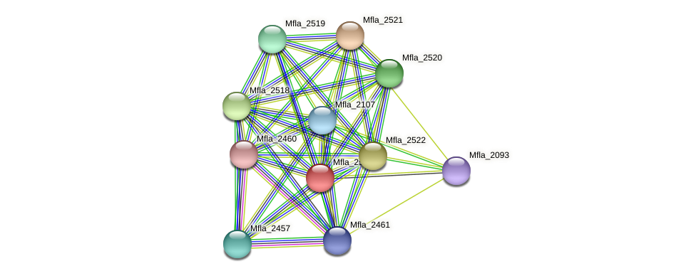 Mfla_2523 protein (Methylobacillus flagellatus) - STRING interaction network