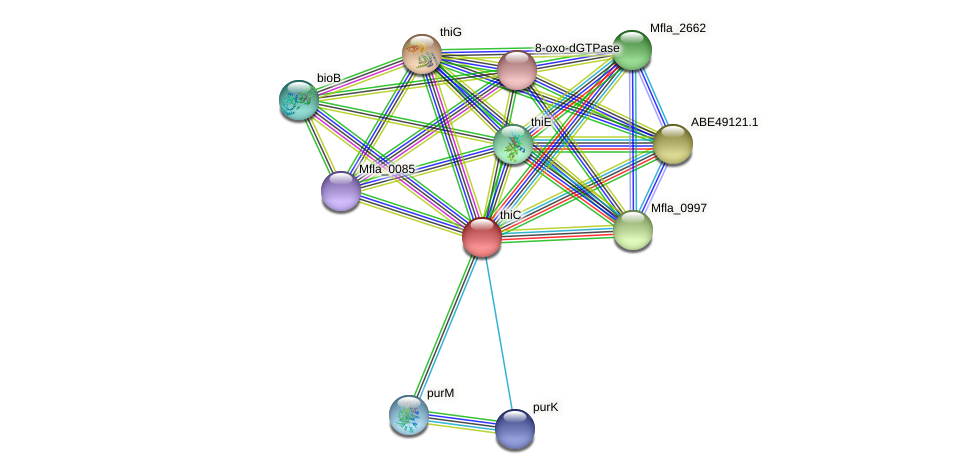 thiC protein (Methylobacillus flagellatus) - STRING interaction network