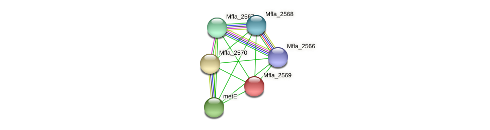 Mfla_2569 protein (Methylobacillus flagellatus) - STRING interaction network