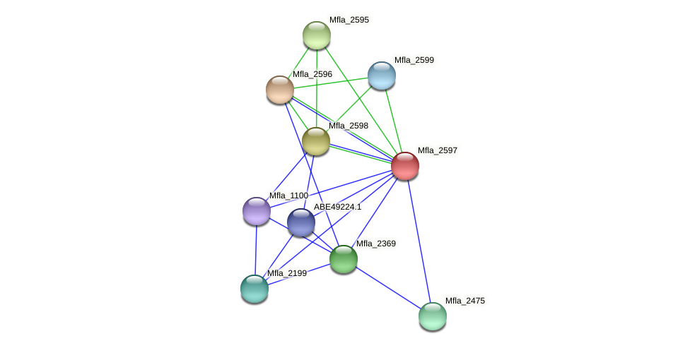 Mfla_2597 protein (Methylobacillus flagellatus) - STRING interaction network