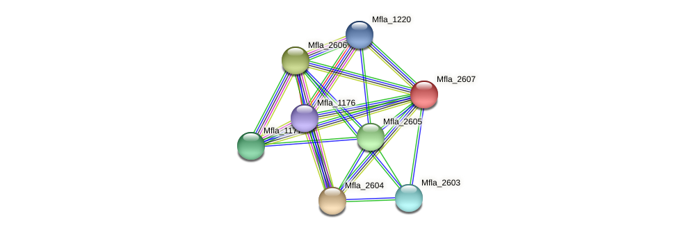 Mfla_2607 protein (Methylobacillus flagellatus) - STRING interaction network