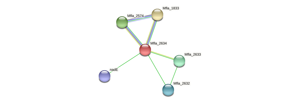Mfla_2634 protein (Methylobacillus flagellatus) - STRING interaction network