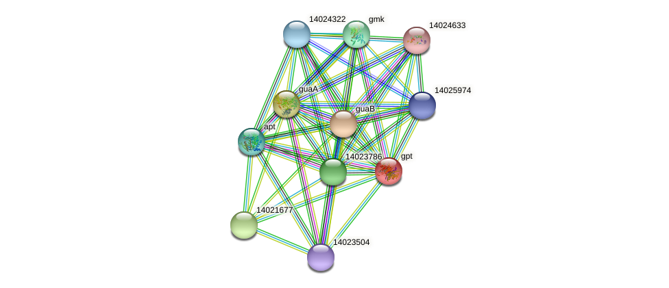 gpt protein (Mesorhizobium loti) - STRING interaction network