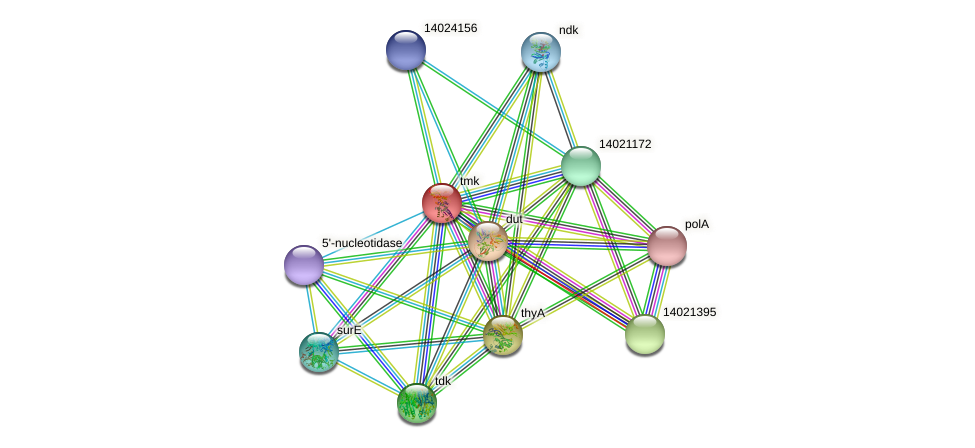 tmk protein (Mesorhizobium loti) - STRING interaction network