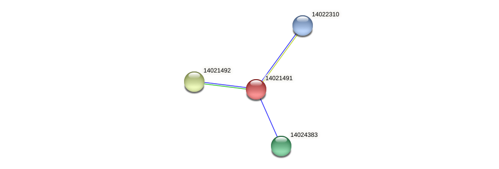 mll0537 protein (Mesorhizobium loti) - STRING interaction network