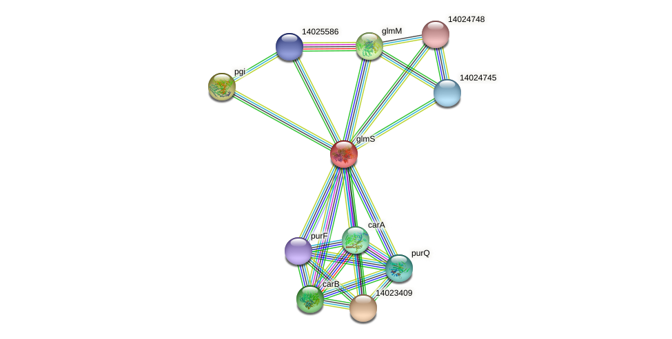 mll0833 protein (Mesorhizobium loti) - STRING interaction network
