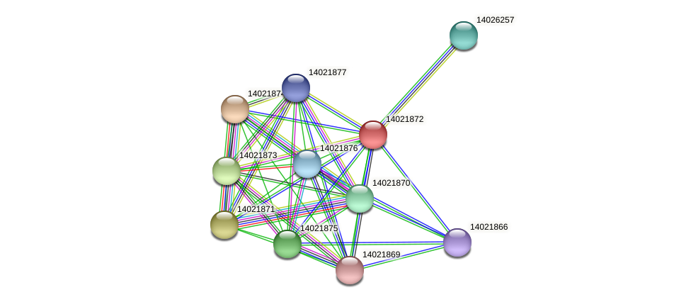 mll1014 protein (Mesorhizobium loti) - STRING interaction network
