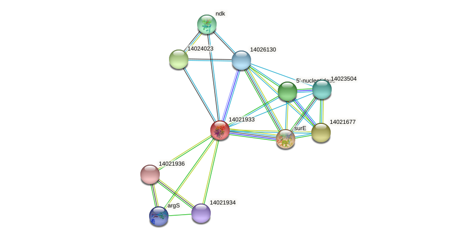 mll1093 protein (Mesorhizobium loti) - STRING interaction network