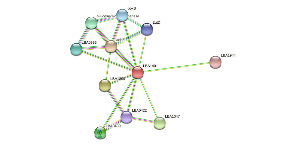 LBA1401 protein (Lactobacillus acidophilus NCFM) - STRING interaction network