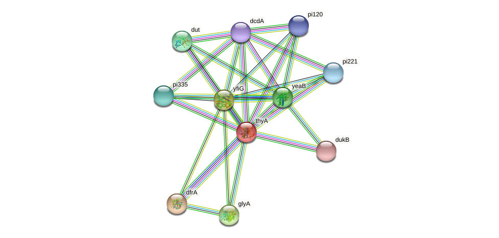 thyA protein (Lactococcus lactis lactis) - STRING interaction network