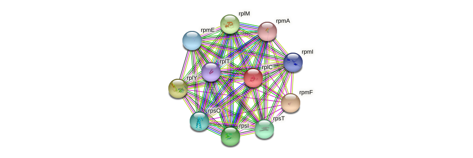 rplC protein (Mycobacterium leprae) - STRING interaction network