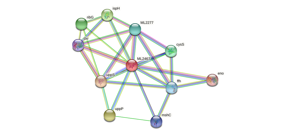 ML2467 protein (Mycobacterium leprae) - STRING interaction network