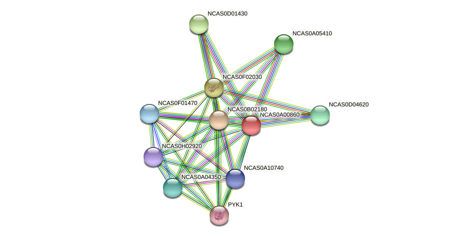 XP_003673037.1 protein (Naumovozyma castellii) - STRING interaction network