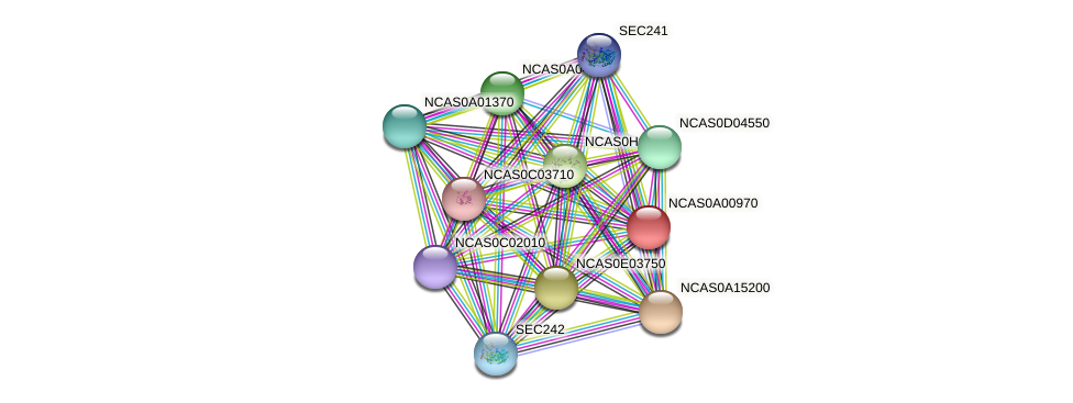 XP_003673048.1 protein (Naumovozyma castellii) - STRING interaction network