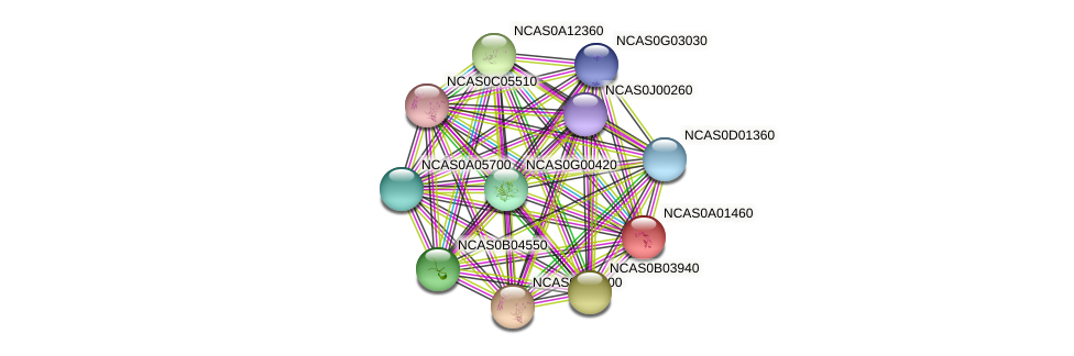 XP_003673097.1 protein (Naumovozyma castellii) - STRING interaction network