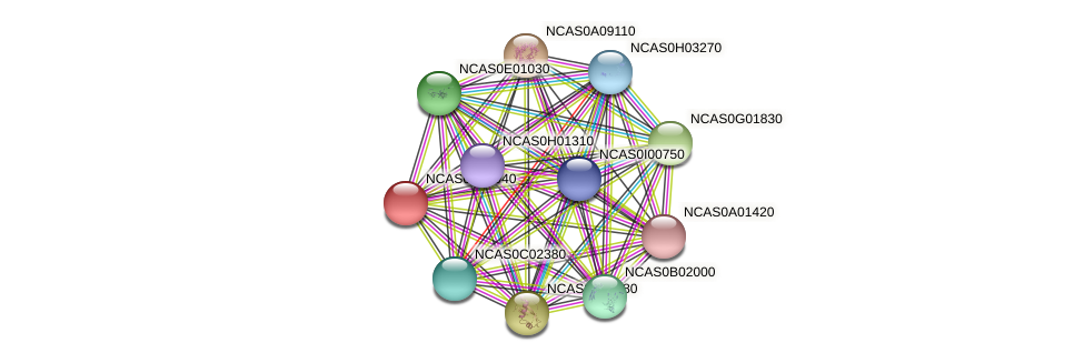 XP_003673243.1 protein (Naumovozyma castellii) - STRING interaction network