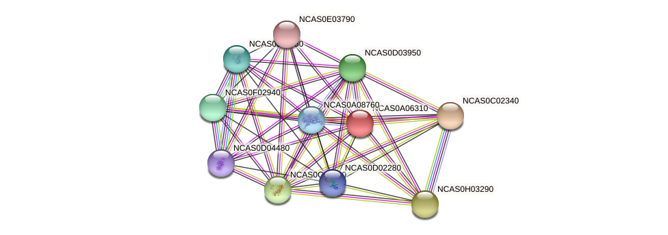 XP_003673572.1 protein (Naumovozyma castellii) - STRING interaction network