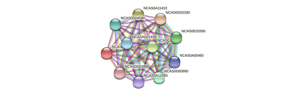 XP_003673644.1 protein (Naumovozyma castellii) - STRING interaction network