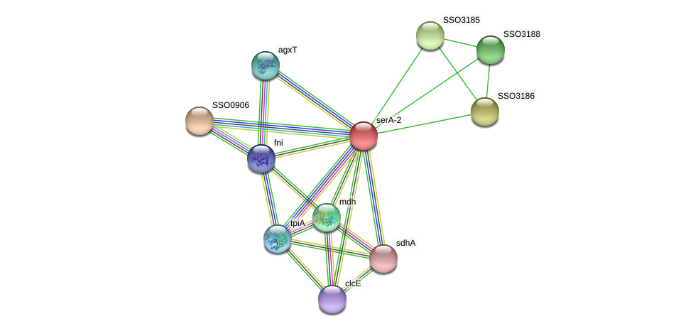 serA-2 protein (Sulfolobus solfataricus) - STRING interaction network