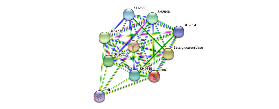 uxaC protein (Staphylococcus haemolyticus) - STRING interaction network