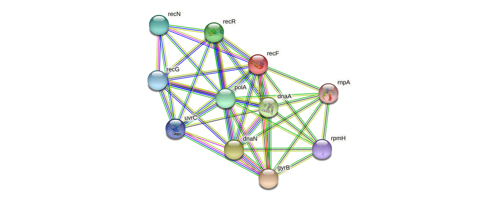 recF protein (Idiomarina loihiensis) - STRING interaction network