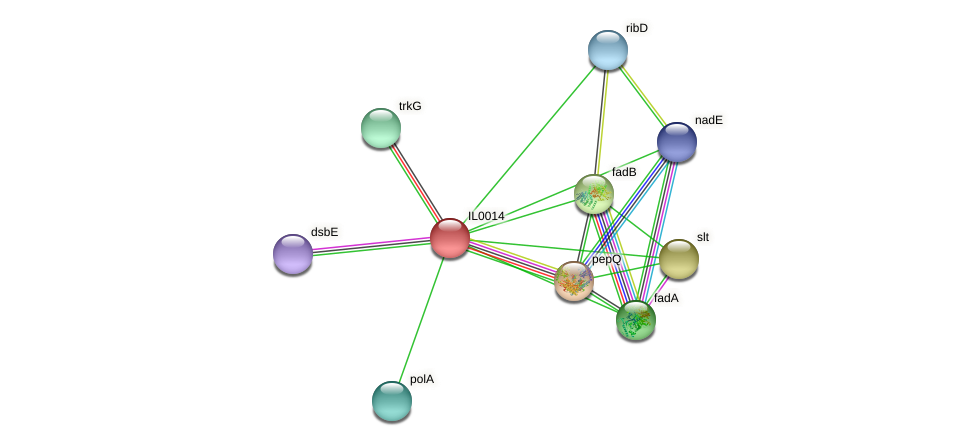IL0014 protein (Idiomarina loihiensis) - STRING interaction network