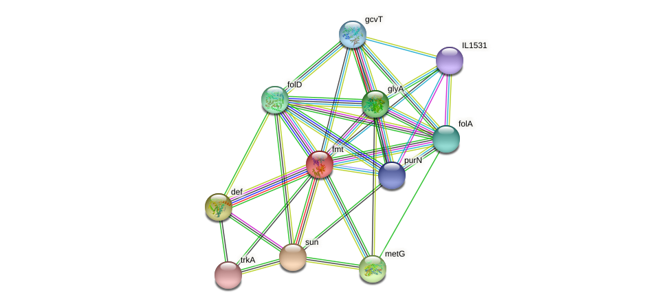 fmt protein (Idiomarina loihiensis) - STRING interaction network