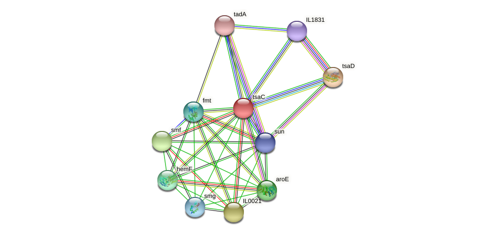 tsaC protein (Idiomarina loihiensis) - STRING interaction network