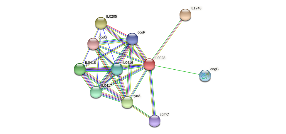 IL0028 protein (Idiomarina loihiensis) - STRING interaction network