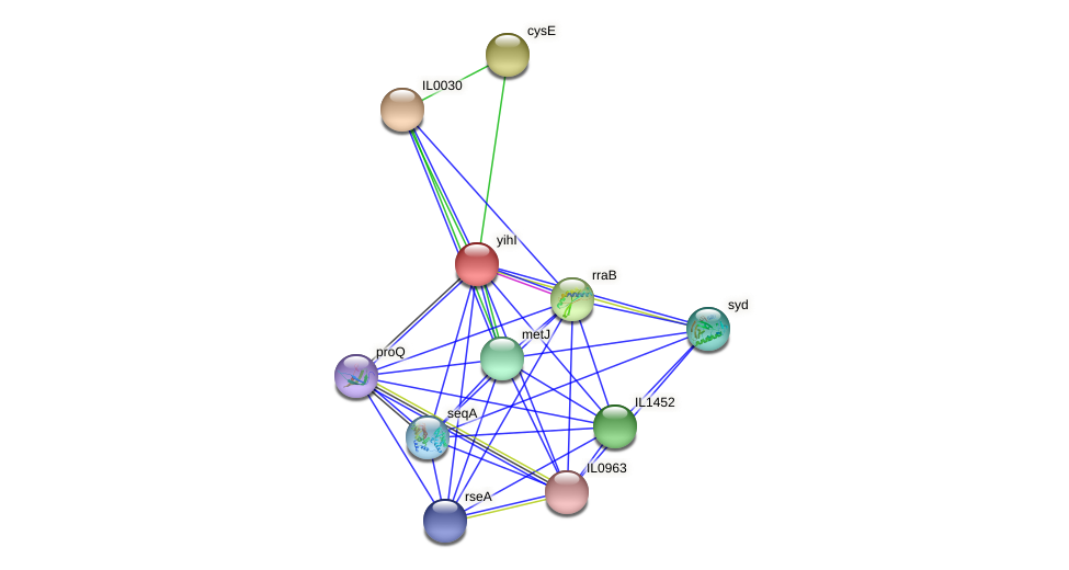 yihI protein (Idiomarina loihiensis) - STRING interaction network