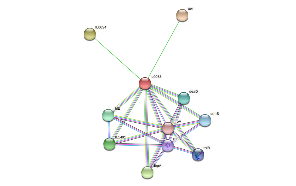 IL0033 protein (Idiomarina loihiensis) - STRING interaction network
