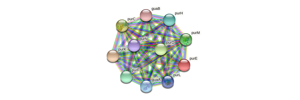 purE protein (Idiomarina loihiensis) - STRING interaction network