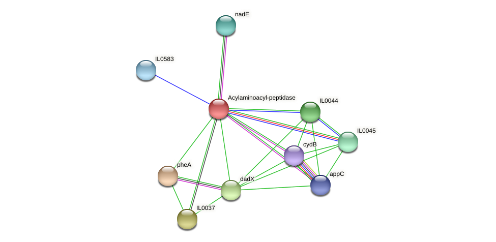 IL0039 protein (Idiomarina loihiensis) - STRING interaction network