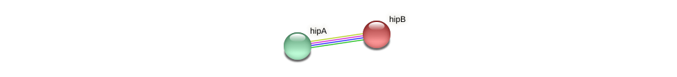 hipB protein (Idiomarina loihiensis) - STRING interaction network