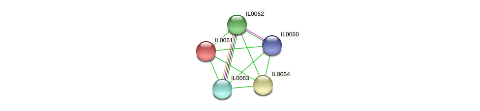 IL0061 protein (Idiomarina loihiensis) - STRING interaction network