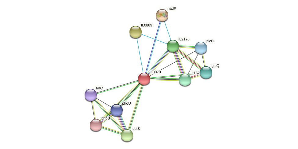 IL0079 protein (Idiomarina loihiensis) - STRING interaction network