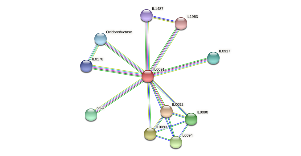 IL0091 protein (Idiomarina loihiensis) - STRING interaction network