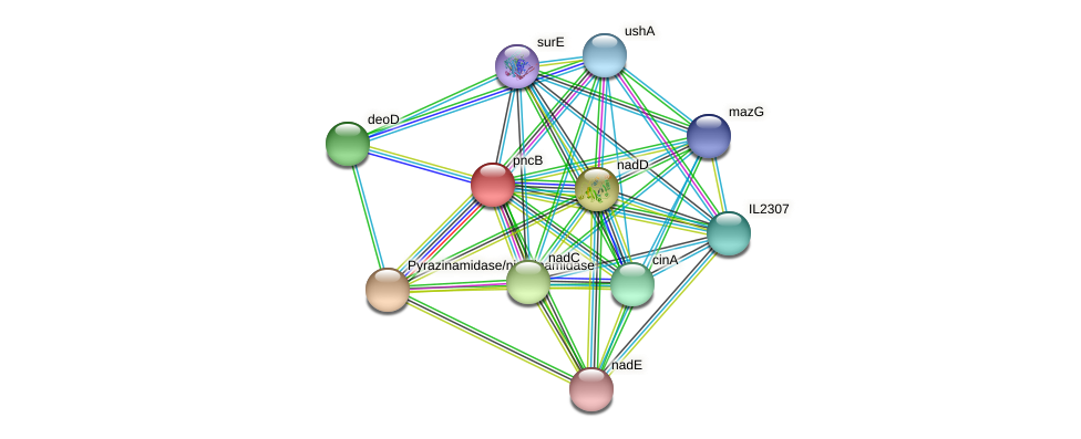 pncB protein (Idiomarina loihiensis) - STRING interaction network