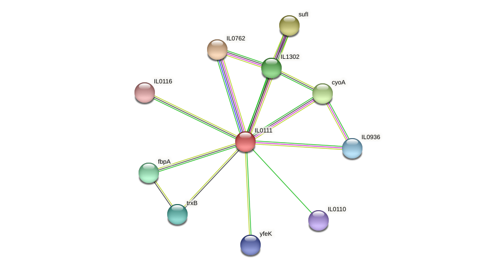 IL0111 protein (Idiomarina loihiensis) - STRING interaction network