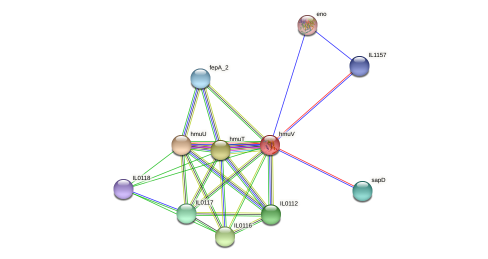 hmuV protein (Idiomarina loihiensis) - STRING interaction network