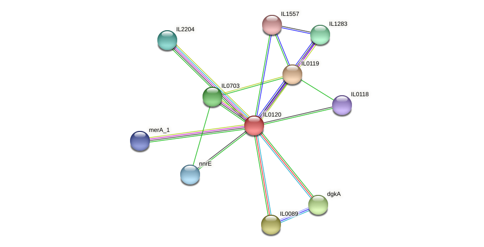 IL0120 protein (Idiomarina loihiensis) - STRING interaction network