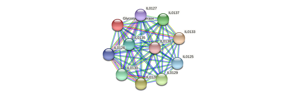 IL0132 protein (Idiomarina loihiensis) - STRING interaction network