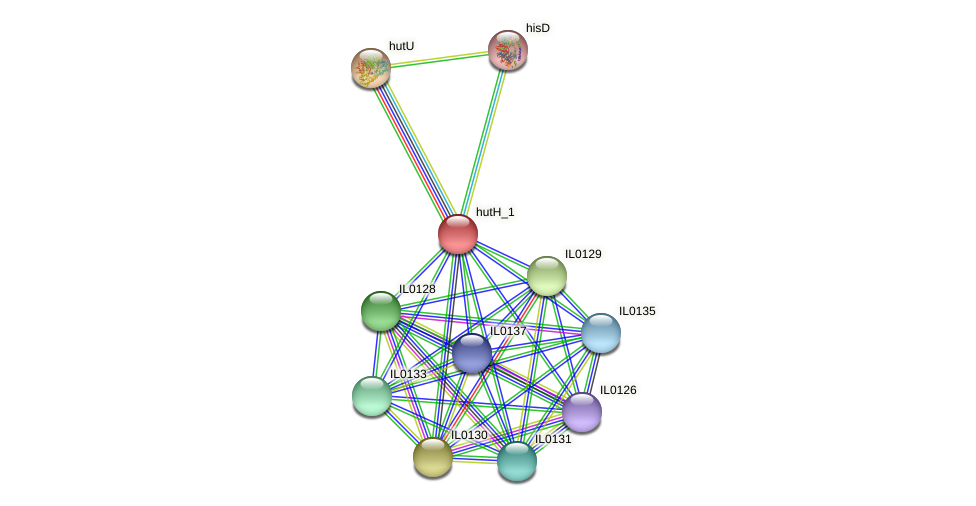 IL0134 protein (Idiomarina loihiensis) - STRING interaction network