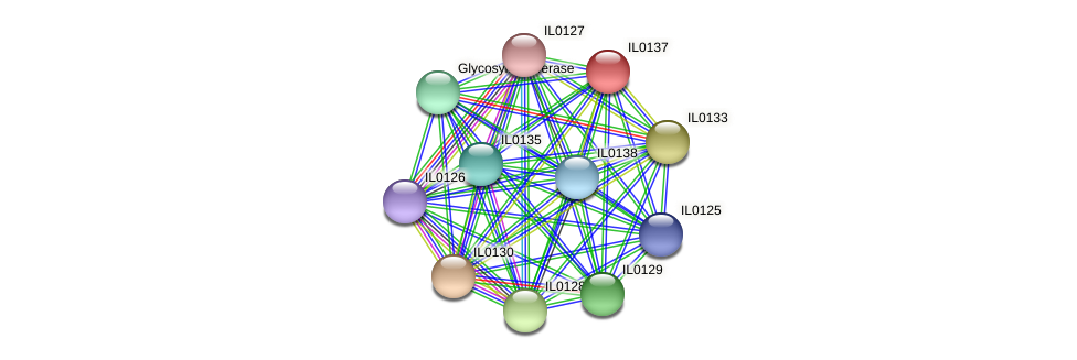IL0137 protein (Idiomarina loihiensis) - STRING interaction network
