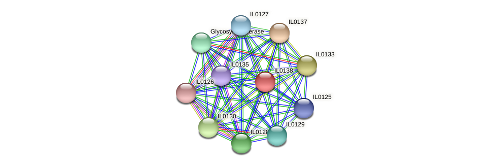 IL0138 protein (Idiomarina loihiensis) - STRING interaction network