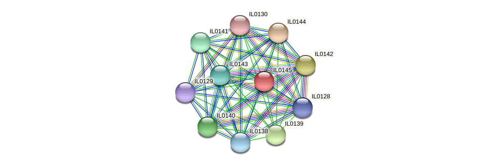 IL0145 protein (Idiomarina loihiensis) - STRING interaction network