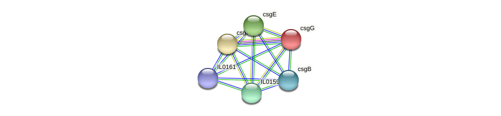 csgG protein (Idiomarina loihiensis) - STRING interaction network
