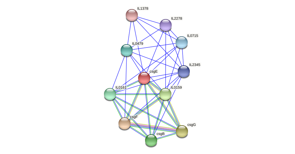 csgE protein (Idiomarina loihiensis) - STRING interaction network
