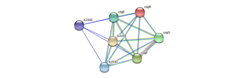 csgB protein (Idiomarina loihiensis) - STRING interaction network