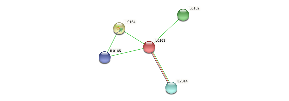 IL0163 protein (Idiomarina loihiensis) - STRING interaction network